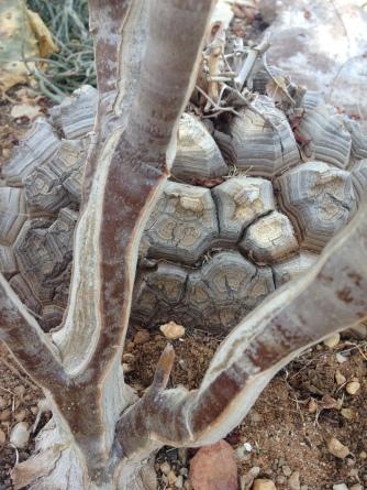 Karoo plants